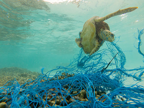 Creating value with ocean waste