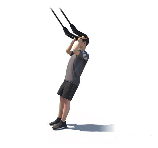 Biceps Curl Suspension